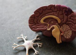 Cérebro: por que as pessoas negam as doenças mentais e a neurodivergência?