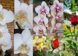 Mosaico de flores: orquídeas brancas, amarela, pintadinha e rosas vermelhas, para ilustrar o texto, meu autismo, meu mundo florido.